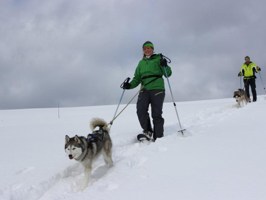 Schneeschuhwandern mit Huskies
